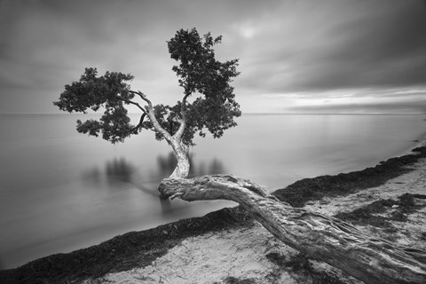 Water Tree 10 BW by Moises Levy