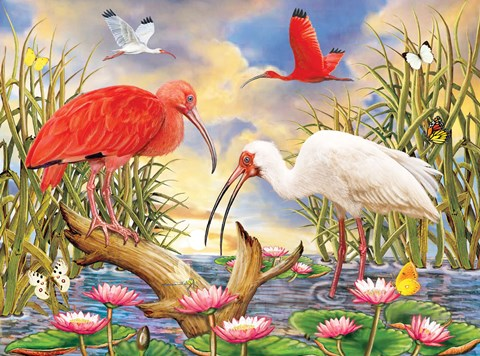 Framed Scarlet And White Ibis Print