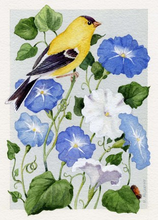 Framed Goldfinch And Morning Glories Print