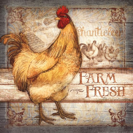 Farm Fresh Rooster Fine Art Print By Mollie B At