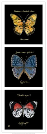 Framed Primary Butterfly Panel II Print