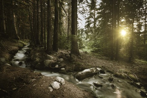 Framed Small stream in a forest at sunset, Pirin National Park, Bulgaria Print