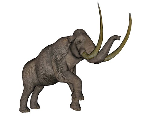 Framed Large mammoth, white background Print