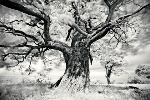 Framed Portrait of a Tree, Study 2 Print