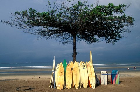 Framed Surfboards Lean Against Lone Tree on Beach in Kuta, Bali, Indonesia Print