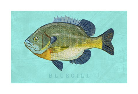 Framed Bluegill Print