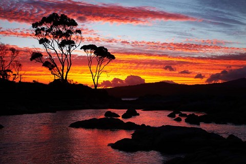 Framed Sunset, Gum Tree, Binalong Bay, Bay of Fires, Australia Print