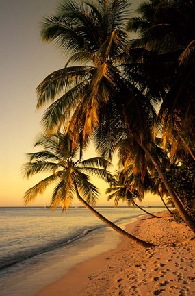 Framed Beach at Sunset, Trinidad, Caribbean Print