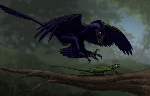 Framed Microraptor Hunting a Small Lizard on a Tree Branch Print