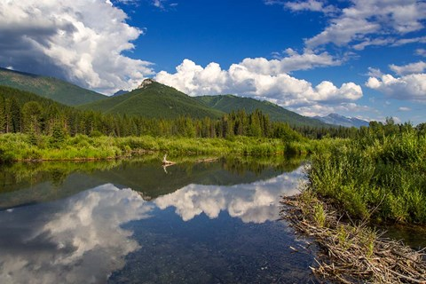 Framed Beaver pond along the Flathead River near Fernie, British Columbia, Canada Print