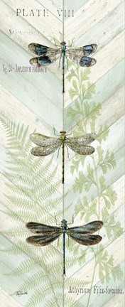 Framed Dragonfly Botanical Panels II Print