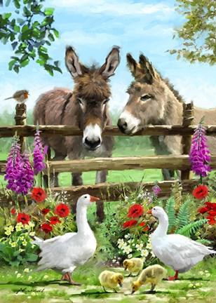 Donkeys Fine Art Print By The Macneil Studio At
