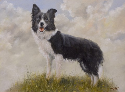 Framed Border Collie 13 Print