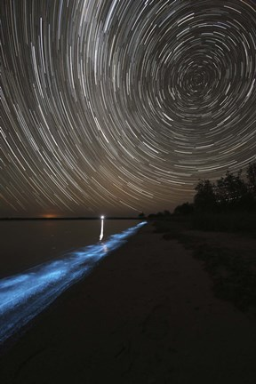 Framed Star Trails over Bioluminescence Print