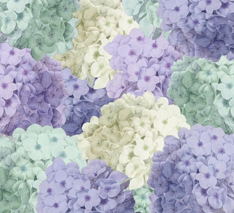 Framed Hortensia Groundless Cool Tones Print
