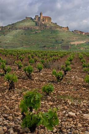 Framed Vineyard in stony soil with San Vicente de la Sonsierra Village, La Rioja, Spain Print
