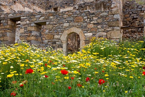 Framed Old building and wildflowers, Island of Spinalonga, Crete, Greece Print