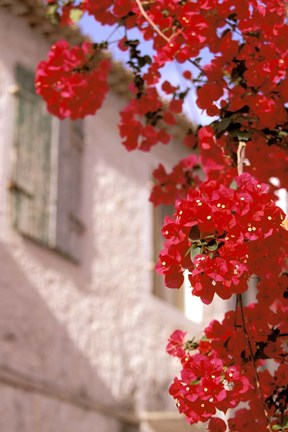 Framed Red Flowers on Main Street, Kardamyli, Messina, Peloponnese, Greece Print
