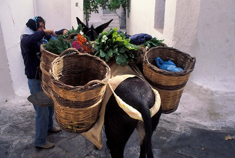 Framed Pack Mule at Market, Santorini, Greece Print