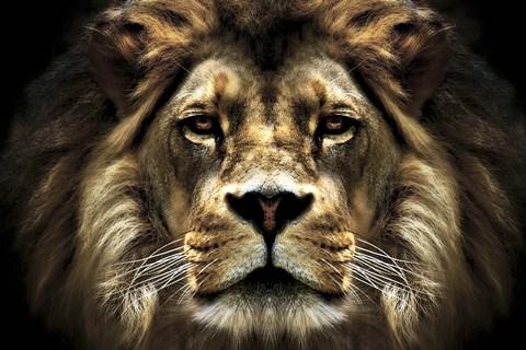 black lion video 1992 imdb - 1024×682
