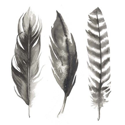 Watercolor Feathers I Fine Art Print By Grace Popp At
