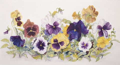 Framed Pansies' Faces Print