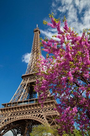 Framed Pink Tree by the Eifel Tower Print