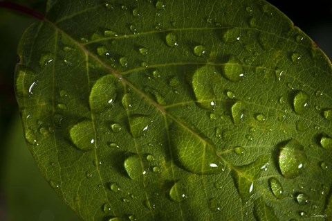 Framed Drops Of Rain On Leaf Print