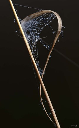 Framed Web On Brown Grass Blade Print