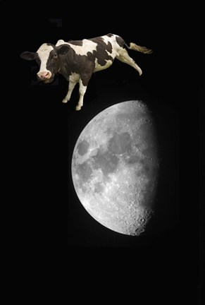 Framed Spotted Cow Over The Moon Print