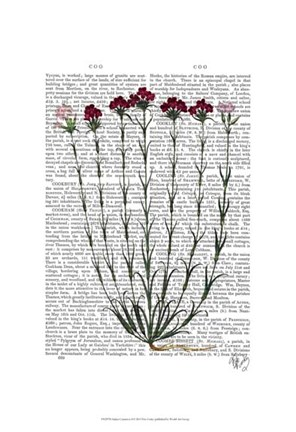 Framed Italian Carnation 4 Print