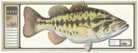 Framed World Record Largemouth Bass Print