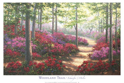 Framed Woodland Trail Print