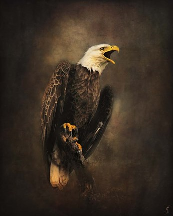 Crying For The Lost Bald Eagle Fine Art Print By Jai