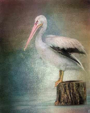 Framed Perched Pelican Print