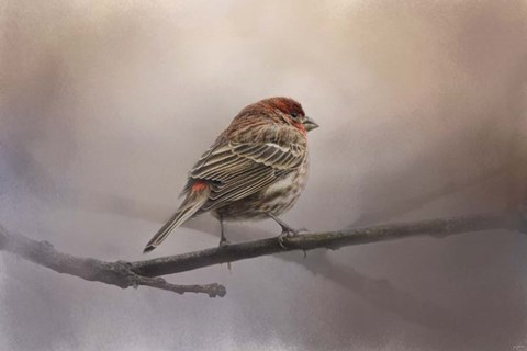 Framed House Finch In January Print