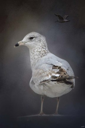 Framed Perched Nearby Gull Print