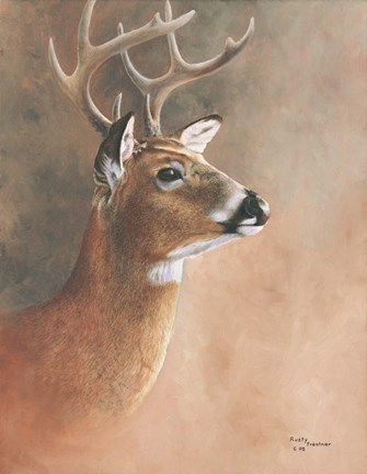 Framed Deer Close-Up Print