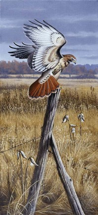 Framed Corner Post - Red Tailed Hawk Print