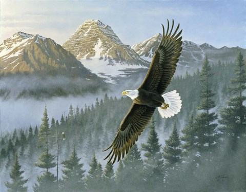 Soaring Eagle Fine Art Print By Wilhelm J Goebel At