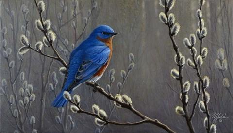 Signals Of Spring Eastern Bluebird Fine Art Print By