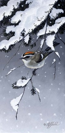 Framed Winter Sprite - Golden Crown Kinglet Print