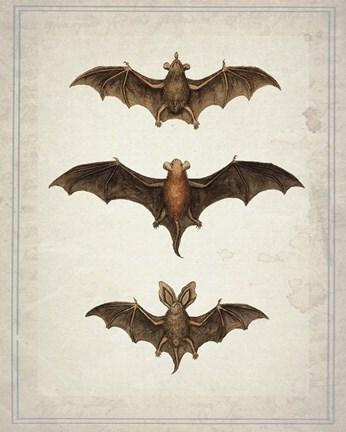 bats fine art print by natasha wescoat at fulcrumgallery com