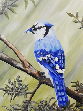 Framed Blue Jay Print