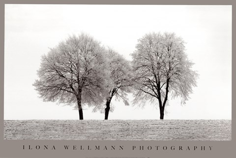 Framed Three Trees Print