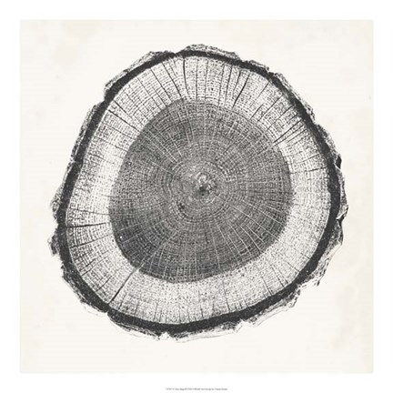 Framed Tree Ring II Print