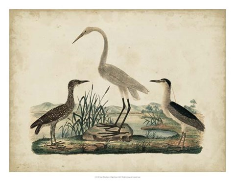 Framed Great White Heron & Night Heron Print