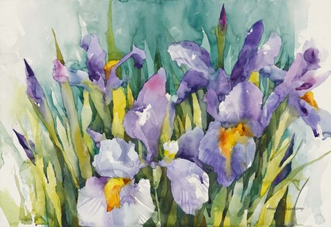 Framed Purple Irises Print