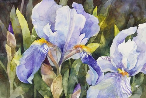 Framed Purple Iris Closeup Print