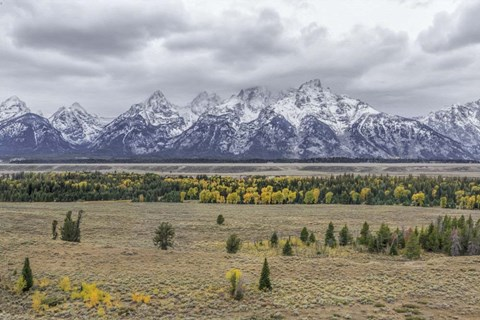 Framed Teton Fall Colors Print